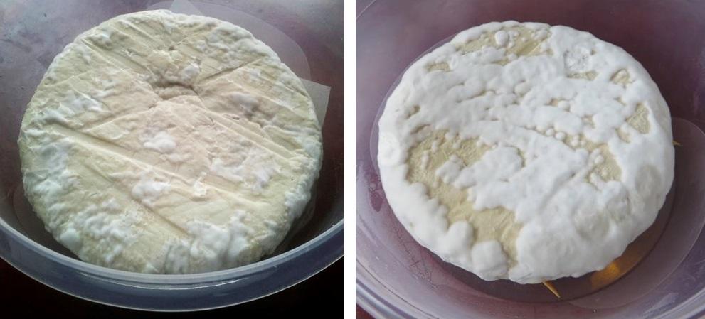 White fungus cheese, vegan